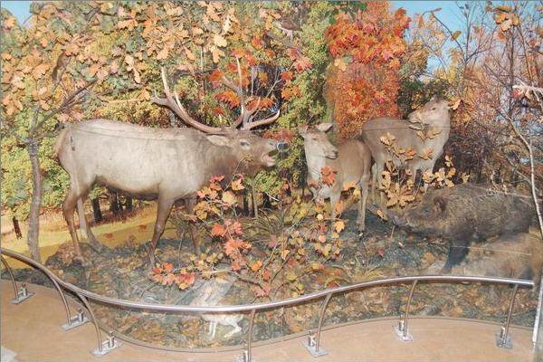 Музей природы во владимире сколько стоит билет афиша театр у никитских ворот на сентябрь