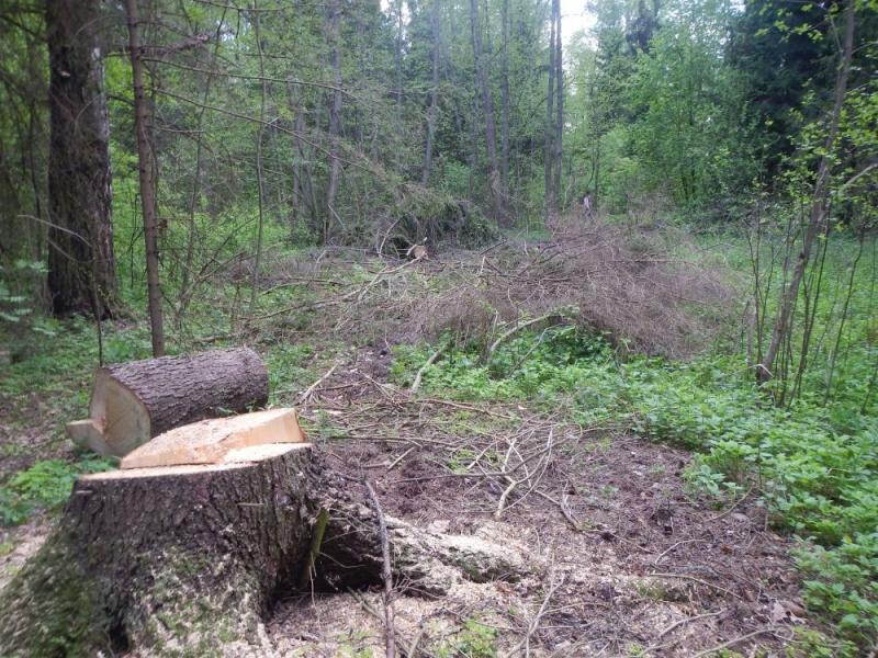 ВКольчугинском районе «черный дровосек» нарубил деревьев на670 тыс. руб.