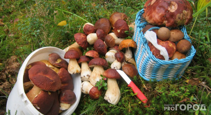 Минсельхоз России не поддержал инициативу налога на грибы и ягоды