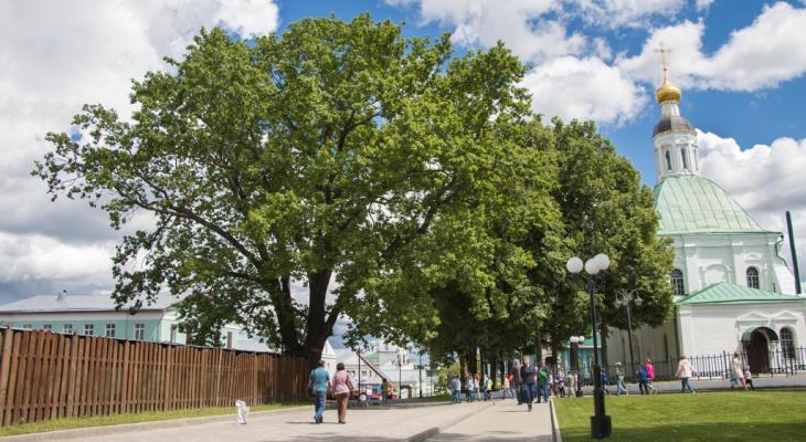 Владимирский черешчатый дуб внесен в национальный реестр уникальных, старовозрастных деревьев