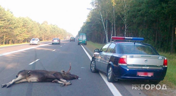Испуганный лось спровоцировал страшное ДТП под Владимиром