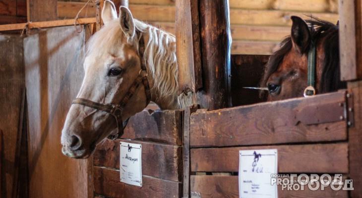 В Суздальском районе автомобилист подал в суд на лошадь