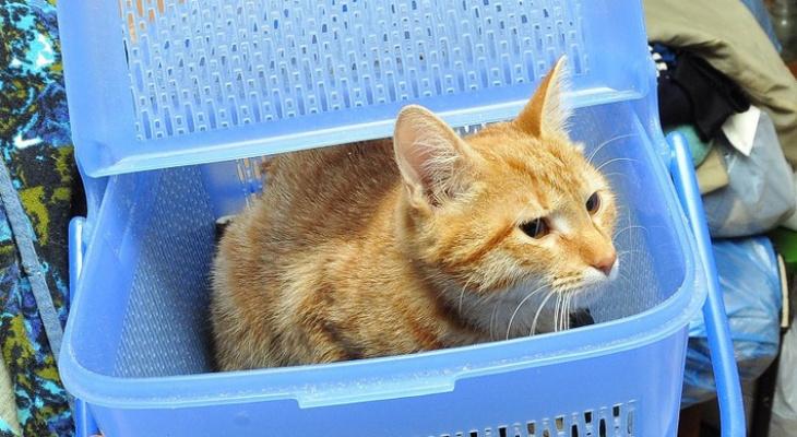 Во Владимире открылось кошачье кафе