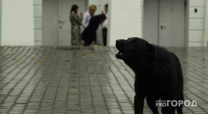 Сторож из Кольчугино стал жертвой бешеной собаки