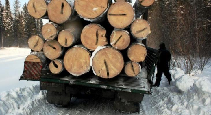 """Двое """"чёрных лесорубов"""" наломали дров на 7 миллионов рублей"""