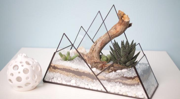 Владимирцам рассказали, как сделать мини-сад в небольших квартирах