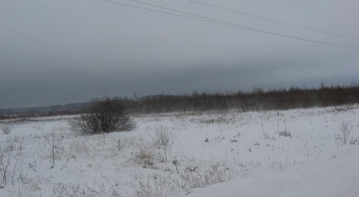 В Гороховце свыше 270 га земель сельхозназначения заросли сорняками