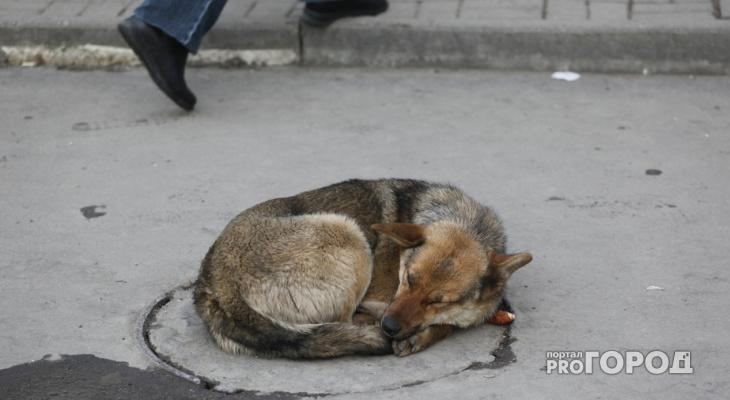 Владимир Сипягин занялся проблемой бездомных собак в столице региона