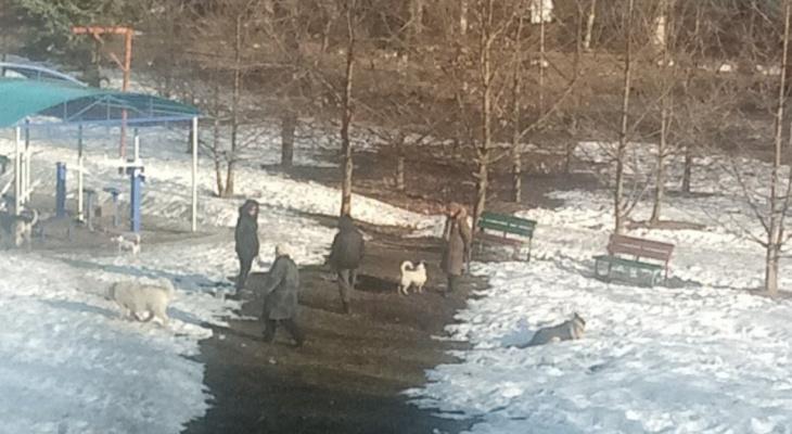 """""""Лают и гадят"""": владимирцы недовольны собаками на детских площадках"""