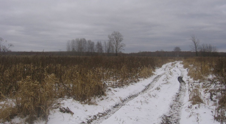 400 тысяч штрафа заплатит владелец земли в Петушинском районе за сорняки