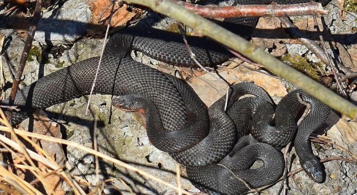 семье было, змеи владимирской области фото и название сапоги