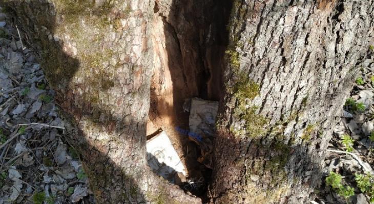 Православный алтарь обнаружен владимирцами в лесу перед Белым домом