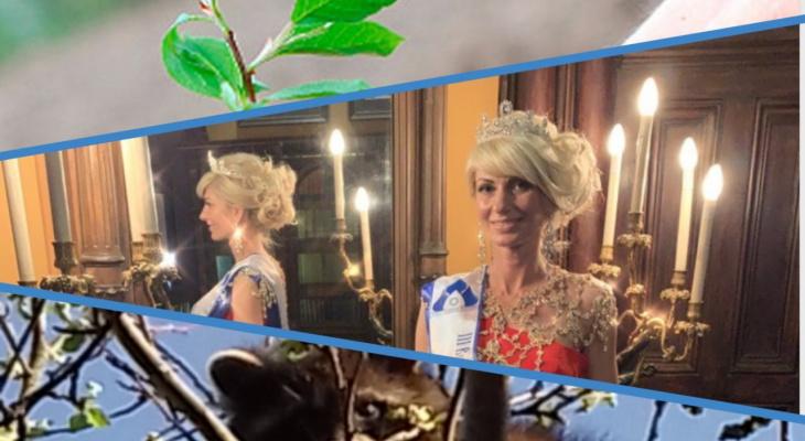 Владимир за день: 150 лип, королева красоты и енот на дереве
