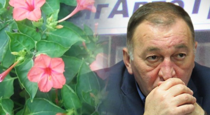 Владимирское утро: яркие цветы, аппетитная щука и воспоминания об ушедшем