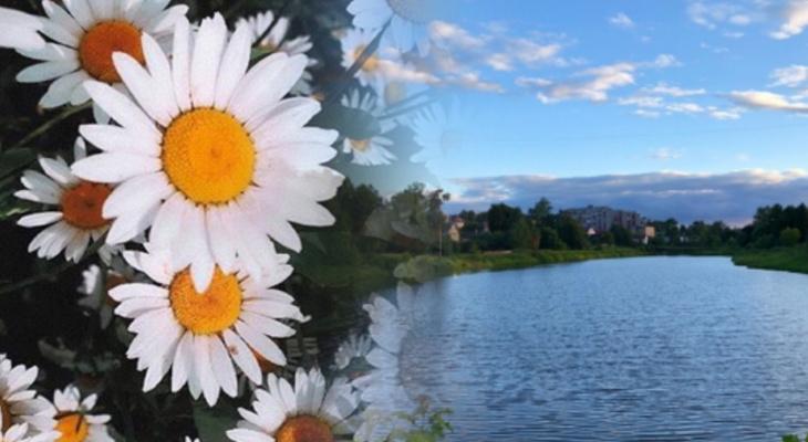 Владимирское утро: ромашки, первый год жизни и живописный круг