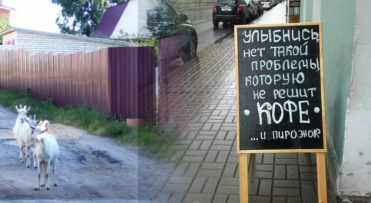 Владимирское утро: озорные козочки, бескрайнее море и граффити