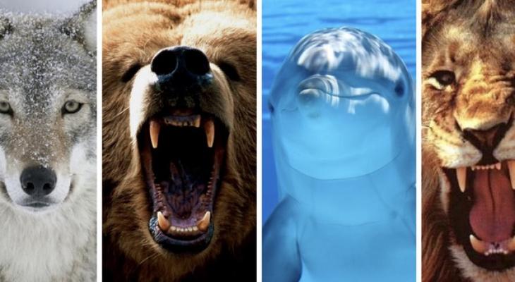 Тест дня: вы волк, медведь, дельфин или лев? Узнайте свой хронотип!