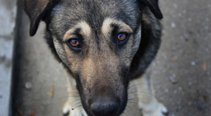Во Владимирской области жестокое убийство собачки