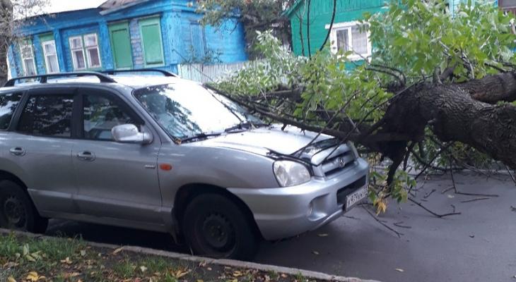 ЧП на Герцена: на легковушку упало дерево