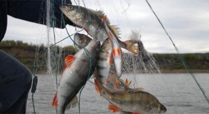 Гороховчан могут оштрафовать на 300 тысяч рублей за ловлю рыбы