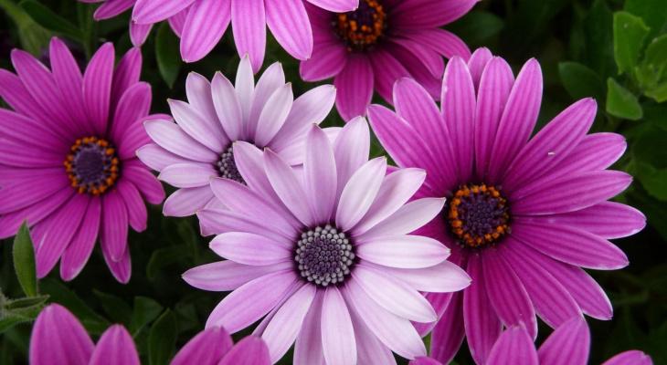 В 33 регионе уничтожена зараженная партия цветов