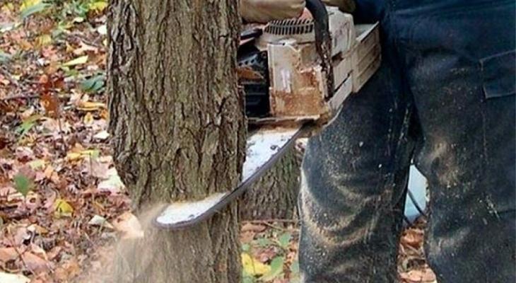 Ковровчанина приговорили к трем годам условно за вырубку сосен