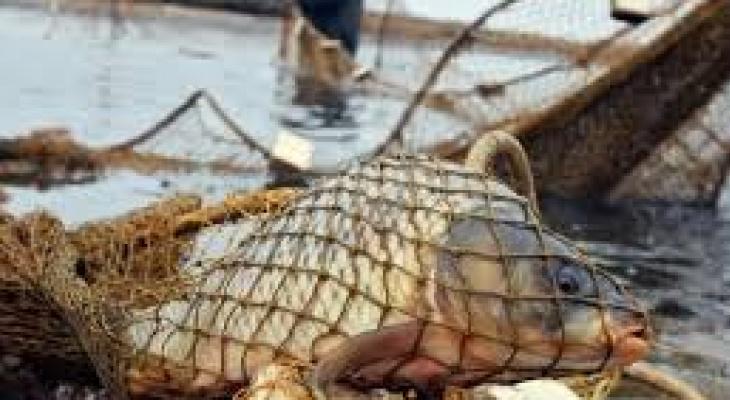 На Оке поймали браконьера. Взятка не помогла