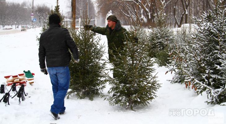 Владимирцам советуют не спешить с украшением новогодней елки
