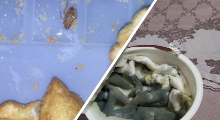 """Чебупели с тараканами и шоколад с червями: неприятные """"сюрпризы"""" в еде"""
