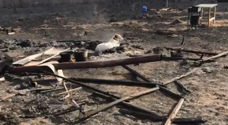 Из-за пала травы в Петушках загорелся собачий приют