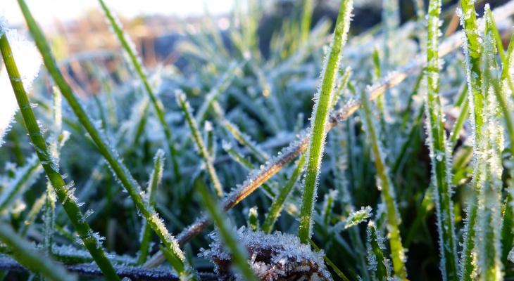 Во Владимире прогнозируют заморозки до -2 градусов