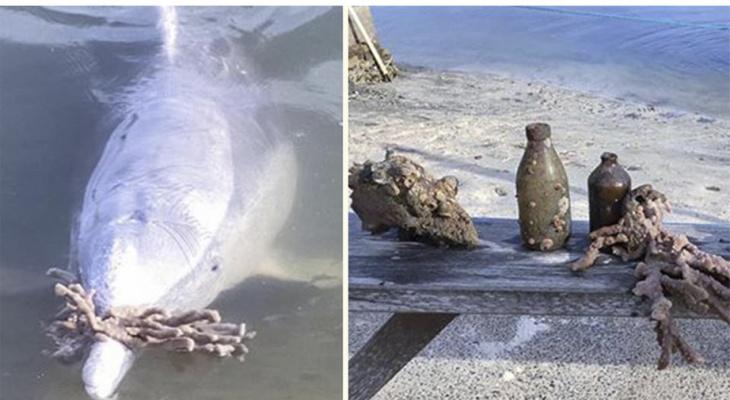 Дельфины соскучились по туристам, которых не было из-за пандемии