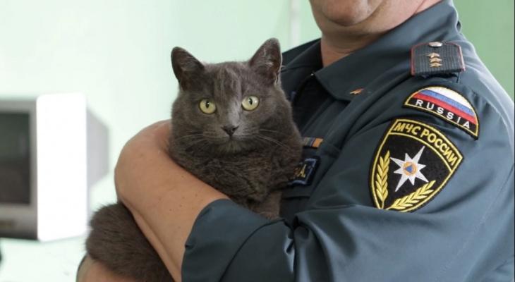 Кошка стала талисманом владимирских пожарных