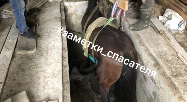 В Мелехово конь Гоша провалился в гараже. Как он там оказался? История умалчивает...