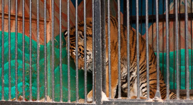 Во Владимирской области найдены грубые нарушения в передвижном зоопарке