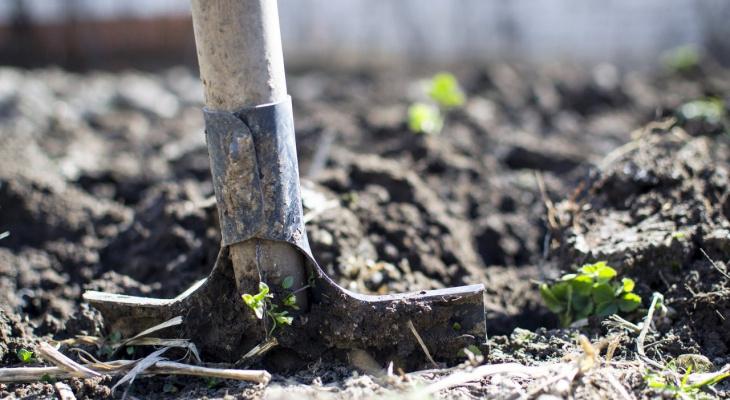 Лайфхак для владимирских дачников. Урожай увеличится на 30-60 процентов!