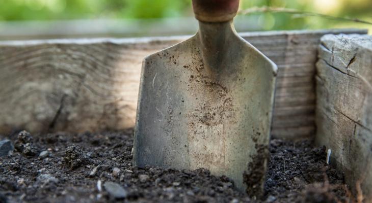 Садоводу из Владимира грозит 2 года тюрьмы из-за 79 кустов конопли