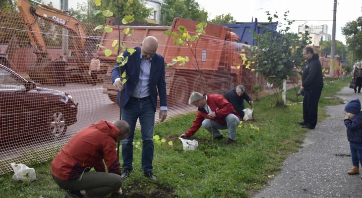 Во Владимире на улице Чайковского высадили аллею из 25 лип