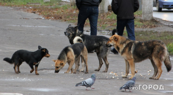 Во Владимире бродячая собака из стаи укусила четвероклассника
