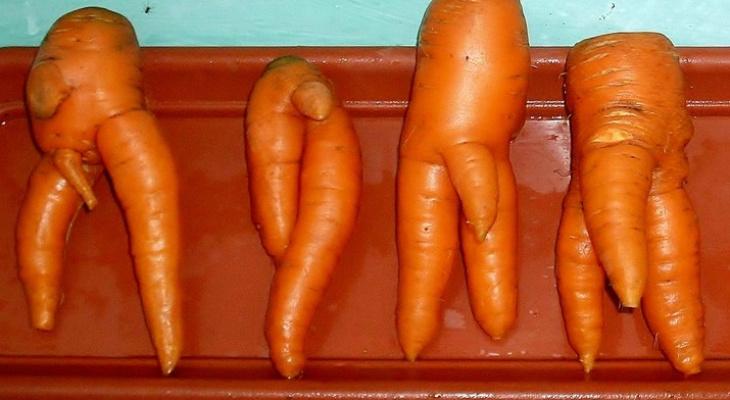 Овощная эротика: владимирцы собрали смешной до неприличия урожай