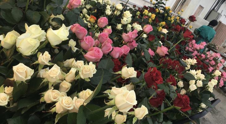 В 20 градусные февральские морозы в теплицах благоухают розы
