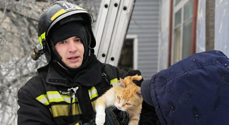 В Гусь-Хрустальном районе на пожаре спасли двух котов