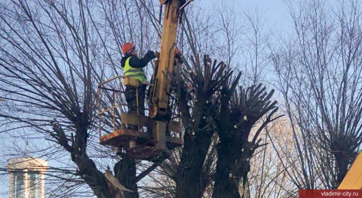 Во Владимире завтра из-за обрезки деревьев перекроют улицу