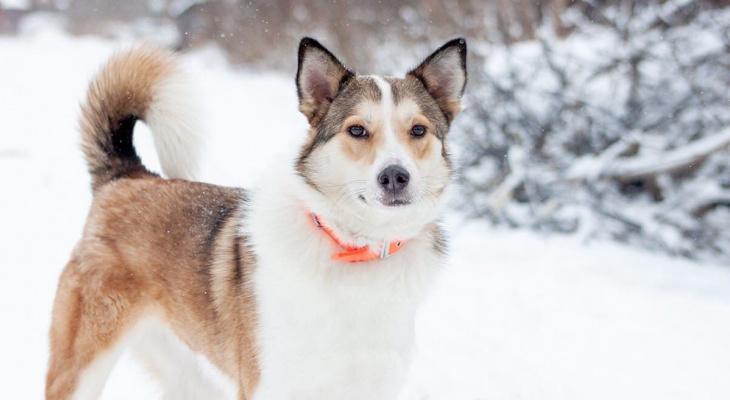 Собаки-скитальцы из владимирского приюта ищут новый дом