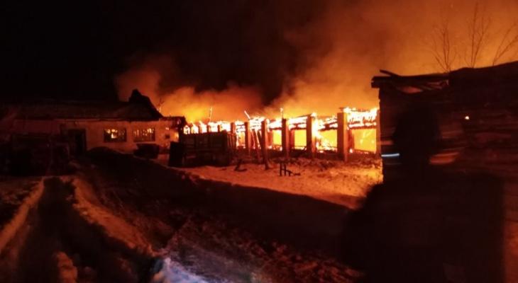Во Владимирской области сгорели несколько коров