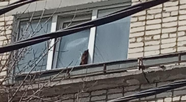 В Гусь-Хрустальном кошка попала в смертельную ловушку на окне своей квартиры