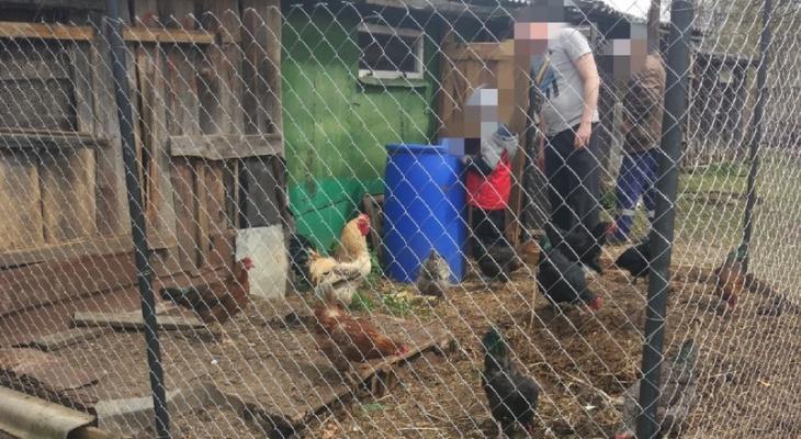 Во Владимирской области массово травят кур
