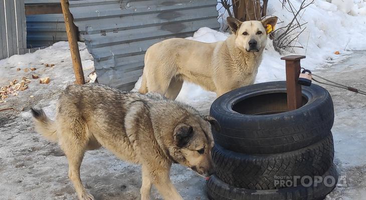 7 изменений в обращении с безнадзорными животными во Владимире