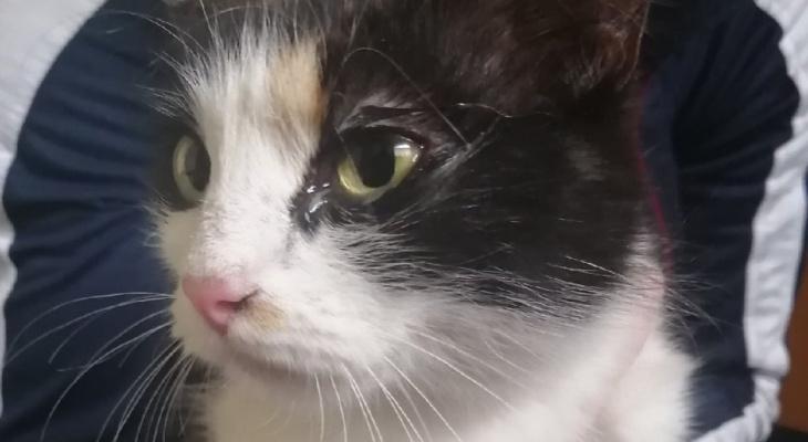 Кошку, которую чуть не разорвали бабушка с внучкой, забрали добрые люди