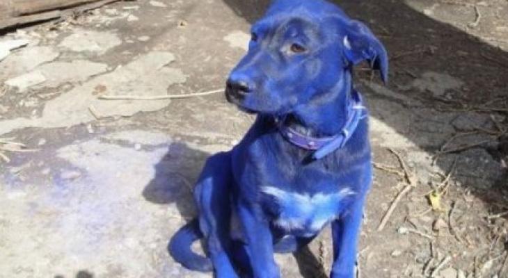 Собака посинела после купания в отравленном ручье